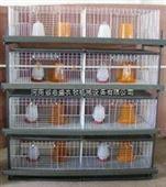 河南省宏盛育雏笼质优价廉立式养小鸡笼直销