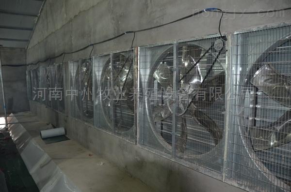 鸡笼厂 风机降温设备 供应蛋鸡肉鸡育雏鸡笼