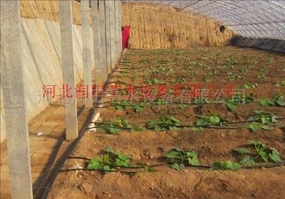 农业灌溉优质滴灌管厂家供应四川项目滴灌管