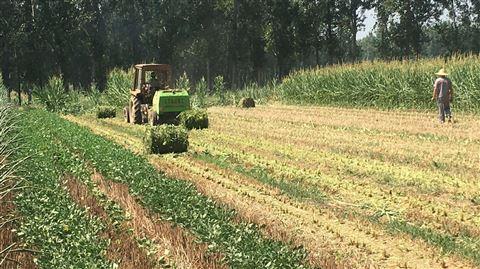 玉米秸秆粉碎打捆机