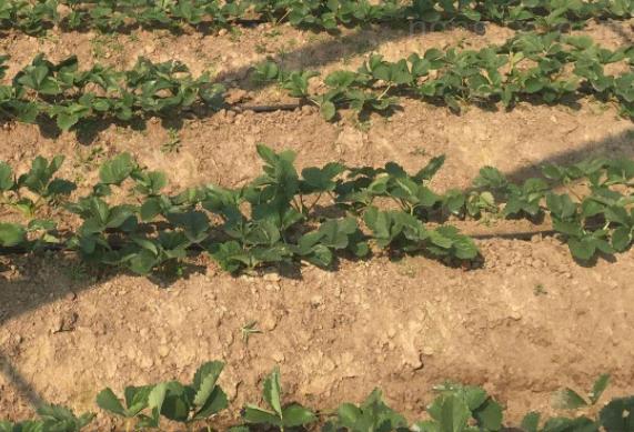 瑞安市設施農業大棚蔬菜滴灌廠家
