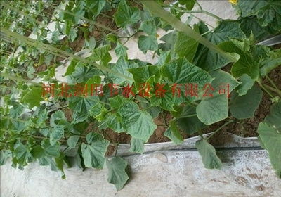 四川罗江区滴灌带厂家供应滴灌带