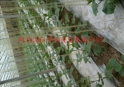 四川自贡市滴灌带厂家价格低廉