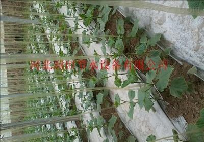 雅安市天全县滴灌带厂家价格