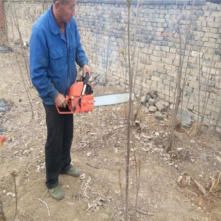 多功能树木移栽机参数 小型起树机