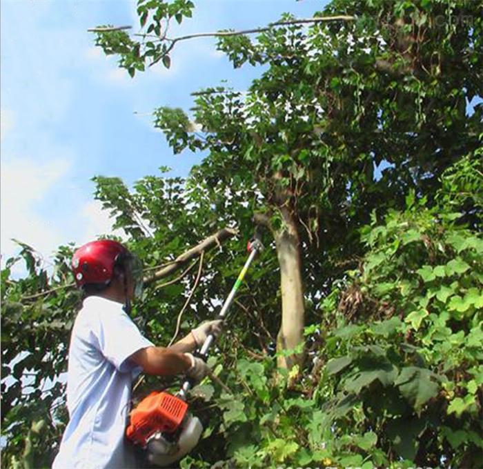 便攜式高枝綠籬機 大樹修剪高枝鋸視頻
