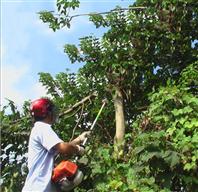山林伐木专用高枝锯 绿化冬青修剪锯