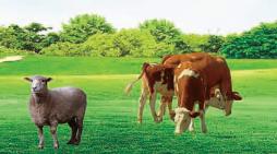 新疆第二届奶业展览会暨新疆国际畜牧业博览会