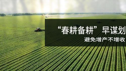 玉米价格上涨受限 合理安排春耕计划 避免增产不增收