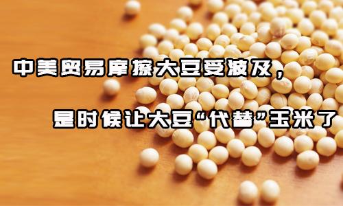 """中美贸易摩擦大豆受波及,是时候让大豆""""代替""""玉米了"""