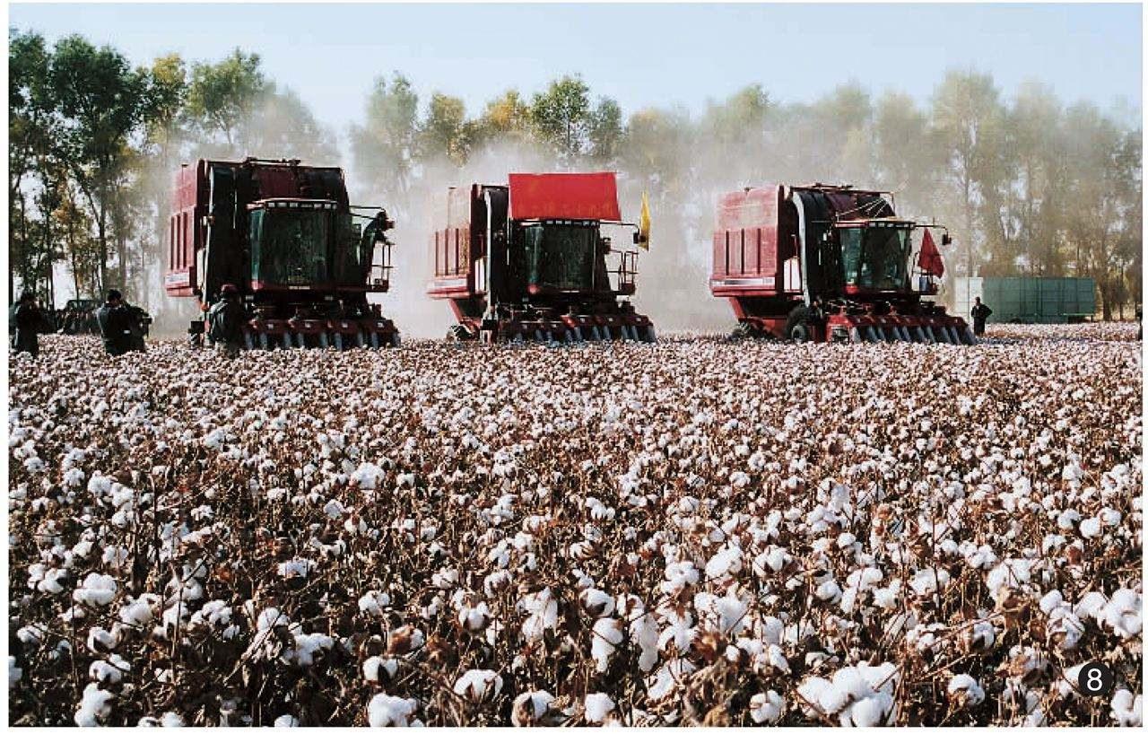 稳中向前:我国棉花生产综合机械化进一步发展
